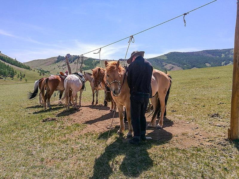モンゴル旅行 ゲル ランチ